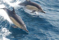 Vivez d'émouvants moments en Méditerranée grâce à Nage avec les Dauphins !